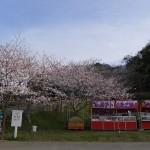 館山 城山公園
