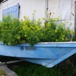 漁船いっぱいの菜の花