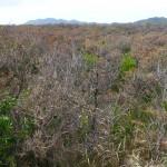 マツ材線虫病(松くい虫)被害の平砂浦