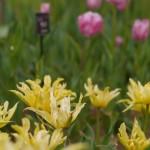 昭和記念公園の花達 2013春