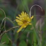 生田緑地の花達