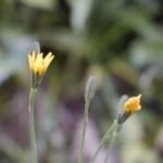 館山城の花
